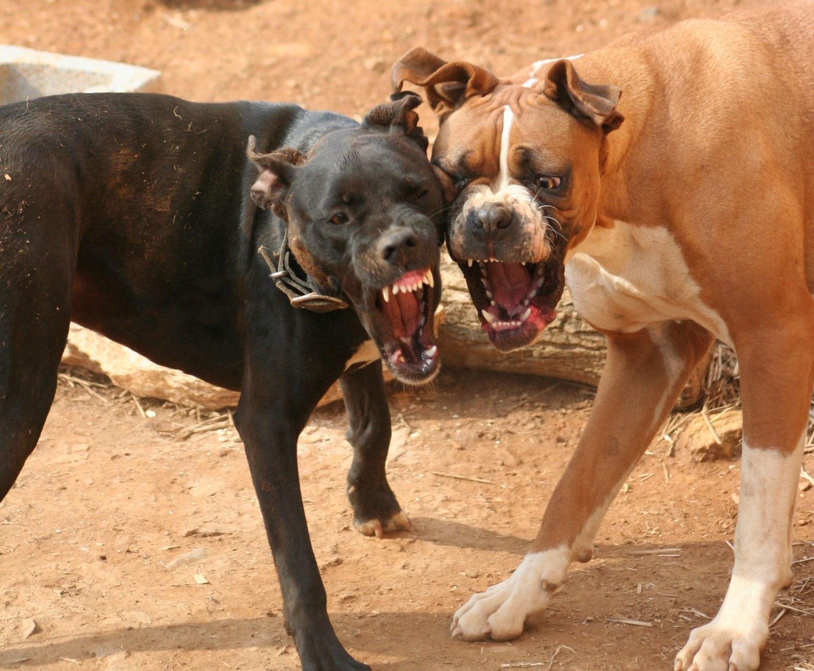 Arkansas Dog Bite Injury Attorney